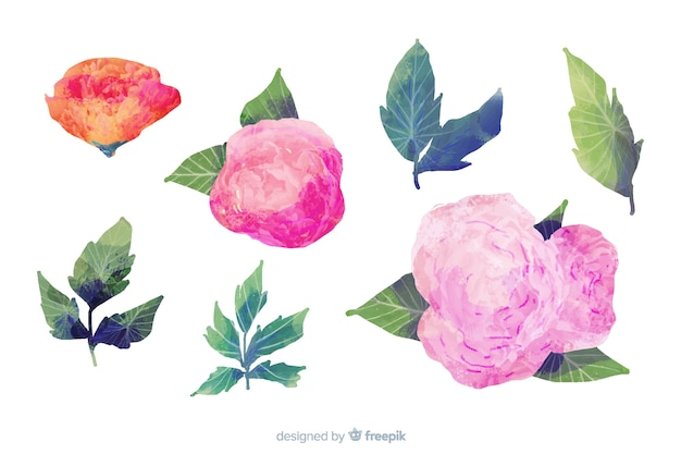 Foglie e fiori sul disegno ad acquerello