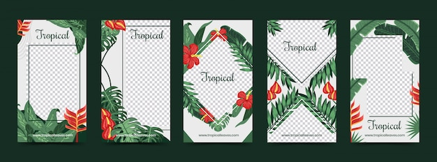 Foglie e fiori tropicali come modello di storie di instagram