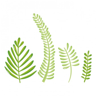 Foglie palme ecologia set icone