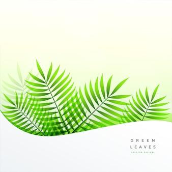 Foglie verdi con lo spazio del testo