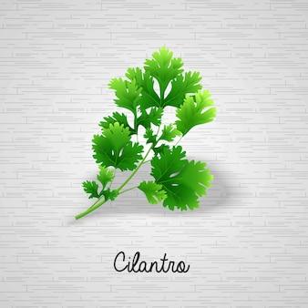Foglie verdi fresche coriandolo nota per editore