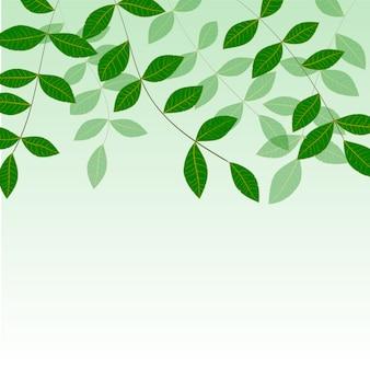 Foglie verdi fresche naturali della primavera su verde