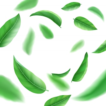 Foglie verdi fresche realistiche su fondo, su tè e sull'erba bianchi