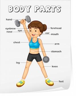 Foglio di lavoro del vocabolario delle parti del corpo