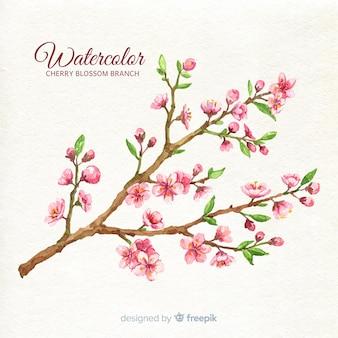 Fondo del ramo del fiore di ciliegia dell'acquerello