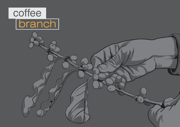 Fondo del ramo di caffè