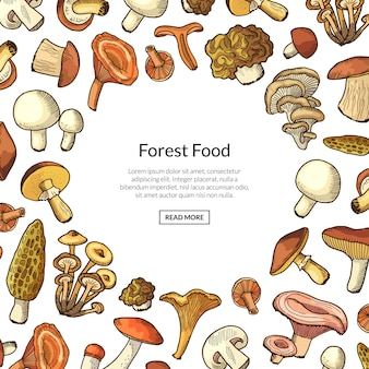 Fondo disegnato a mano della struttura dei funghi di vettore con il modello del testo