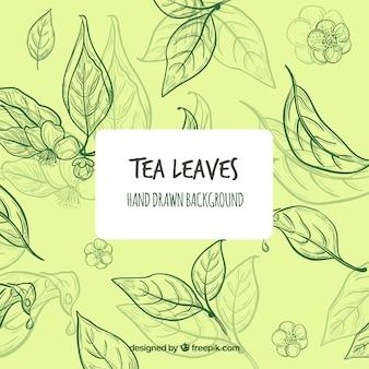 Fondo disegnato a mano delle foglie di tè