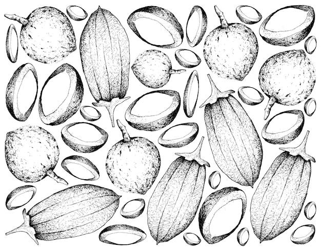 Fondo disegnato a mano di bacuri e frutti di baobab