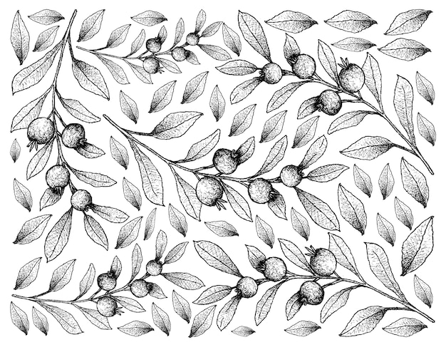 Fondo disegnato a mano di skecth dei frutti di roxo di cambui