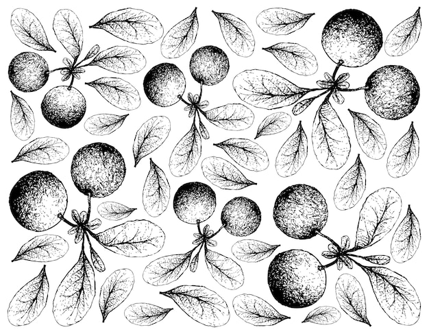 Fondo disegnato a mano di skecth dei mirtilli di palude freschi