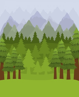 Foresta con alberi di pino