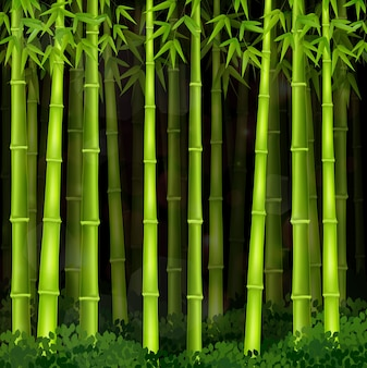 Foresta di bambù sfondo di notte