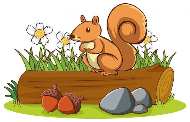 Foto di simpatico scoiattolo