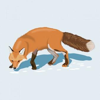 Fox nella neve