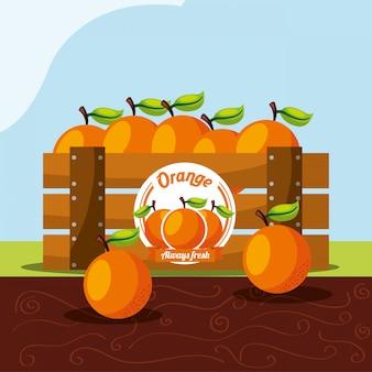 Frutta arancione sempre fresca nel cestino di legno