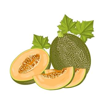 Frutta del melone su bianco