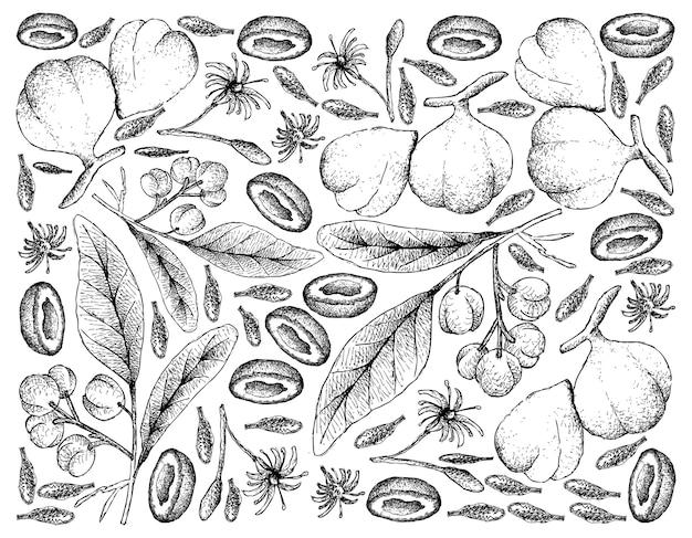 Frutta disegnata a mano