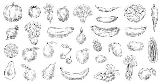 Frutta e verdura abbozzata. insieme disegnato a mano dell'illustrazione di schizzo dell'alimento biologico, dell'incisione della frutta e della verdura