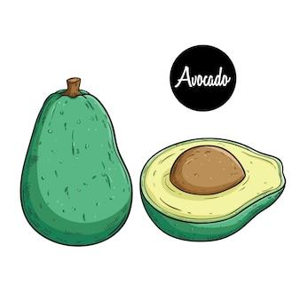Frutta fresca di avocado disegnato a mano colorata con testo su sfondo bianco