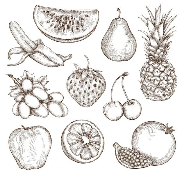 Frutta, schizzi, disegno a mano, set vettoriale