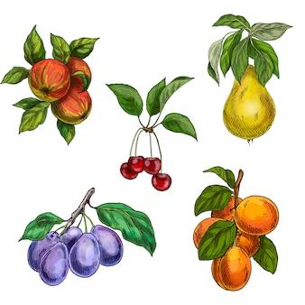 Frutti del giardino con foglie e rami. ciliegia, mele, pere, prugne, albicocche.