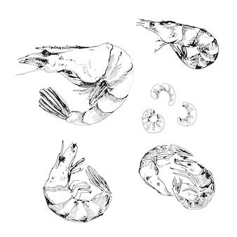 Frutti di mare. gamberetti insieme di disegno