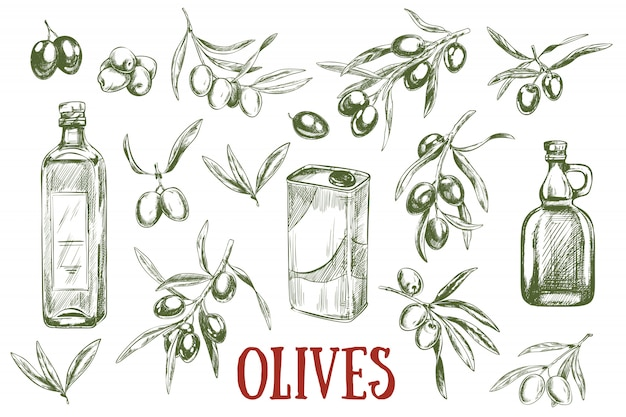 Frutti disegnati a mano olive, rami e olio d'oliva