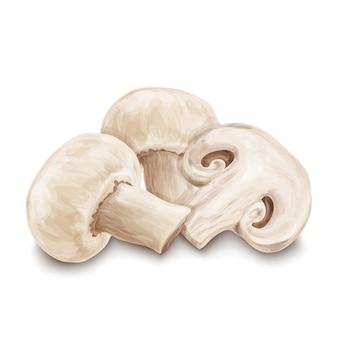 Funghi champignon isolati