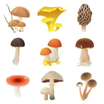 Funghi commestibili