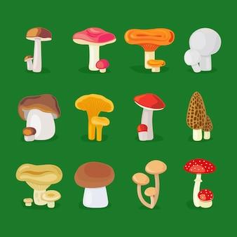 Funghi di vettore isolato