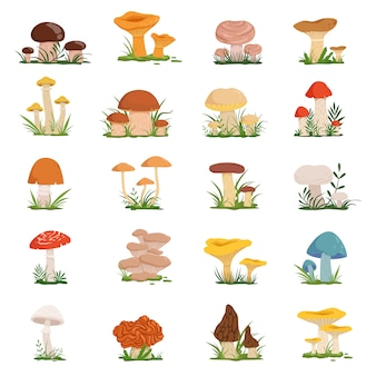 Funghi diversi su erba verde. set vettoriale