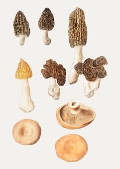 Funghi in stile vintage