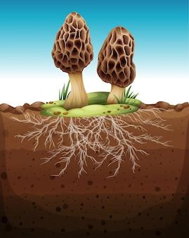 Fungo che cresce dal sottosuolo