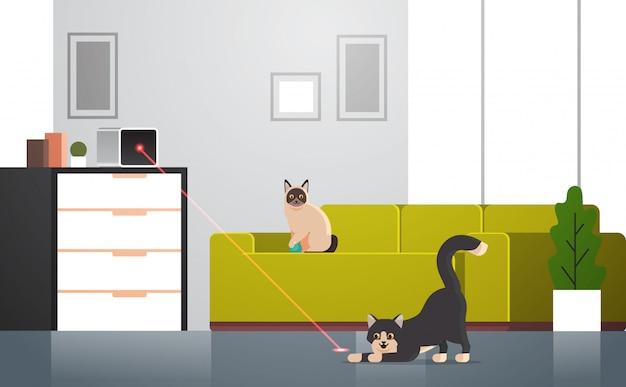Gatti che giocano con il giocattolo interattivo del laser orizzontale adorabile lanuginoso interno domestico interno del salone di concetto domestico domestico domestico lanuginoso degli animali domestici adorabili del fumetto