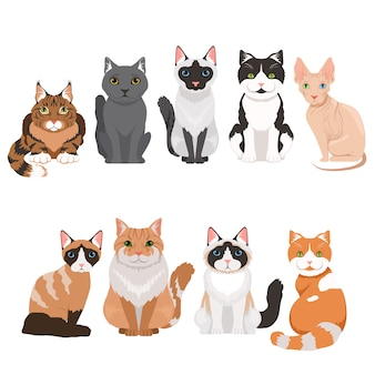 Gatti domestici in stile cartoon. le illustrazioni di vettore isolano su bianco