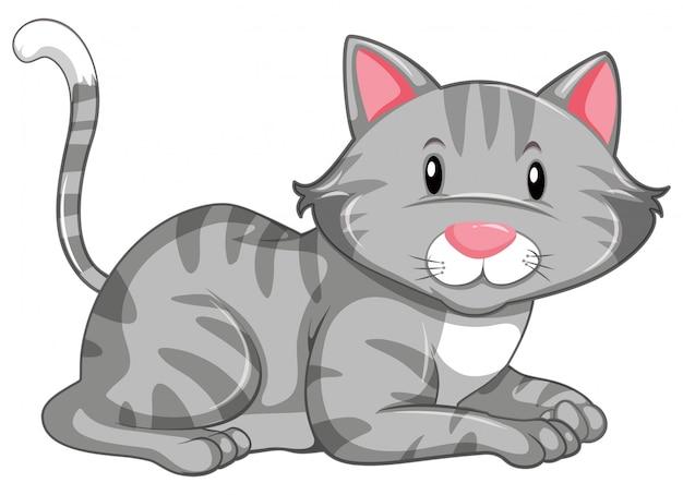 Gattino carino su bianco