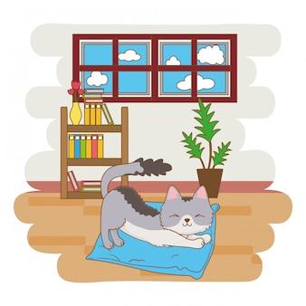 Gatto che si estende sul suo letto