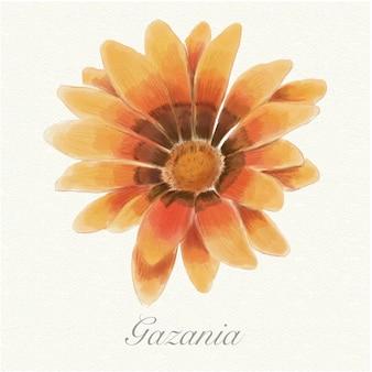 Gazania arancio dell'acquerello isolato