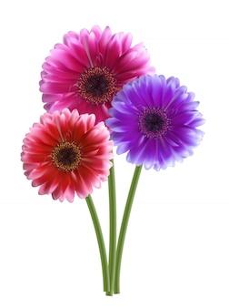 Gerbera illustrazione fiore