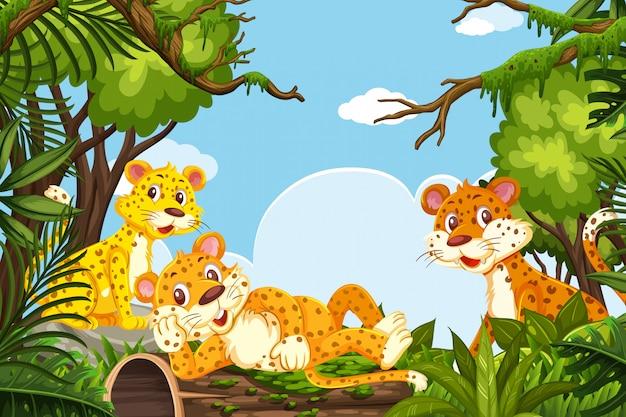 Ghepardi nella scena della giungla