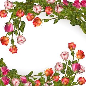 Ghirlanda di rose isolata on white.