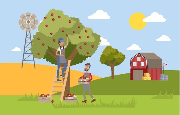 Giovane agricoltore femminile felice in piedi sulla scala e raccogliendo mele rosse da un enorme albero di mele. coltivatore maschio che raccoglie le mele in una scatola. estate in campagna. illustrazione