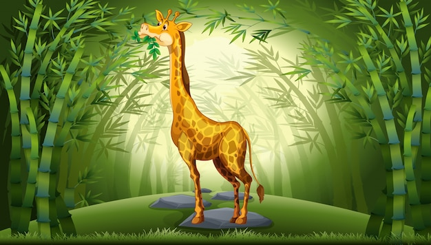 Giraffa nella foresta di bambù