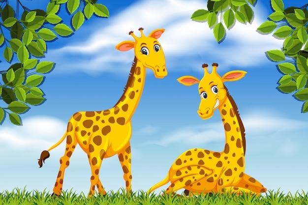 Giraffe nella scena della giungla