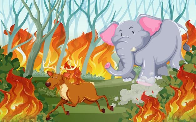 Gli animali scappano da un incendio
