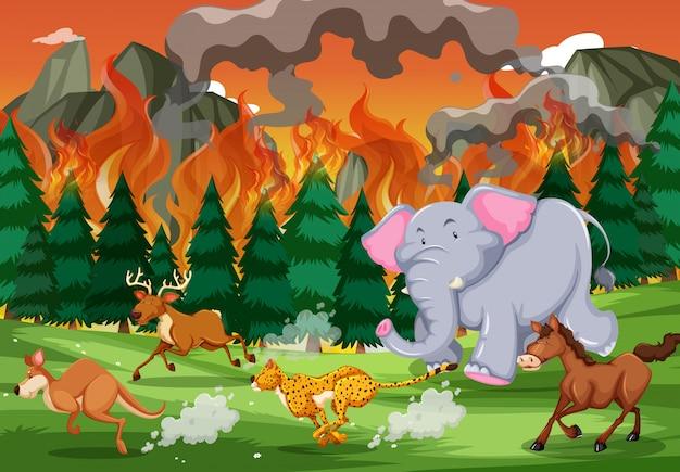 Gli animali selvaggi fuggono da un incendio