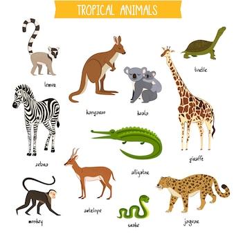 Gli animali tropicali hanno messo l'illustrazione isolata di vettore
