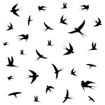 Gli uccelli volteggiano