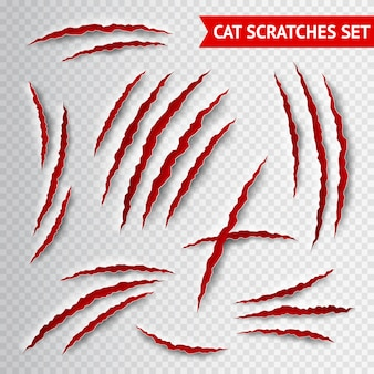 Graffi di gatto trasparenti